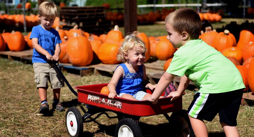 Pumpkin Patch - October 14th to 31st