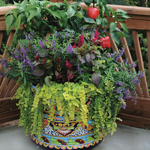 Plant Your Own Container Garden